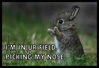 i'm in your field, picking my nose